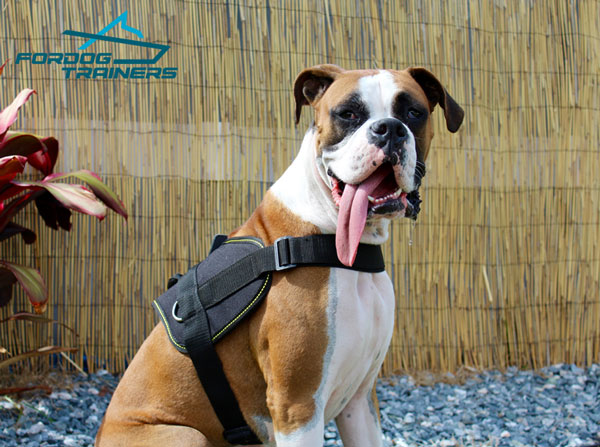Any Weather Walking Boxer Harness for Medium and Large Breeds