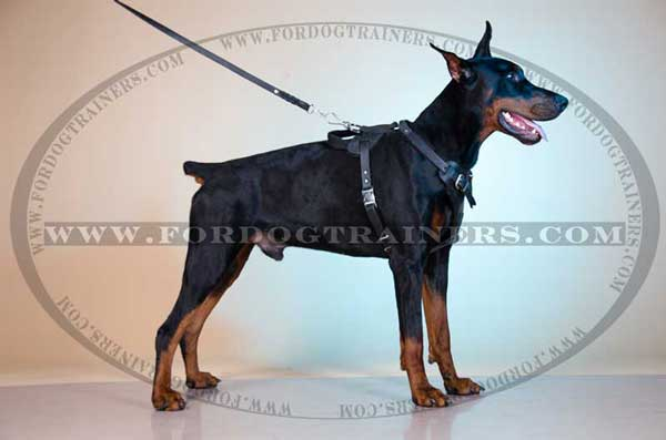 Leather Doberman Harness