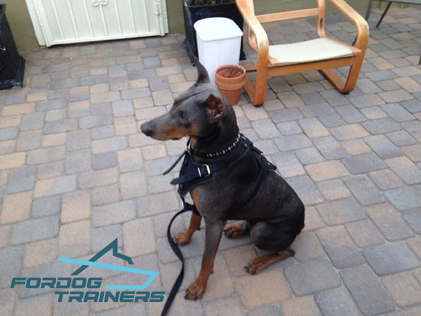 Adjustable Leather Doberman Harness - Best Dog TRaining equipment