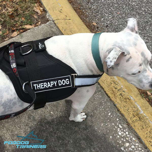 Reflective Nylon Canine Harness for Better Visibility