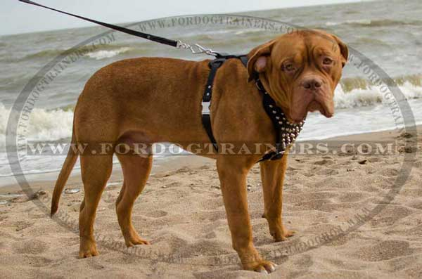 Dogue de Bordeaux Leather Harness with Quick Release Buckle