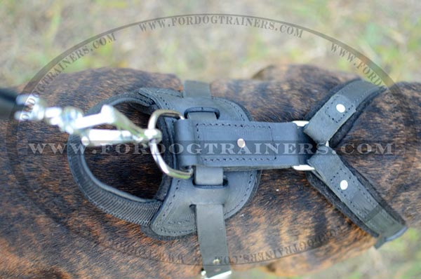 Nickel Plated Durable D-ring on Dog Harness Leather for Staffordshire Terrier