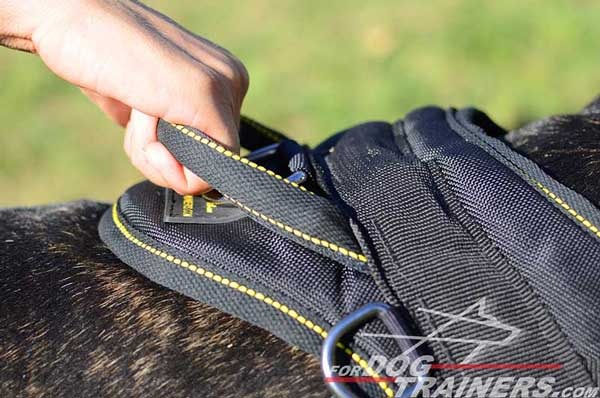 Training Durable Handle on Nylon Bull Terrier Harness