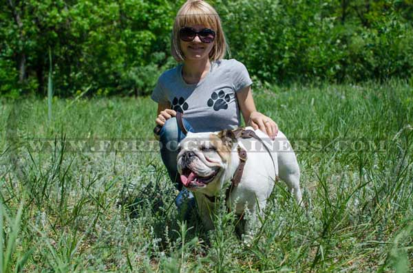 Training Leather English Bulldog Harness