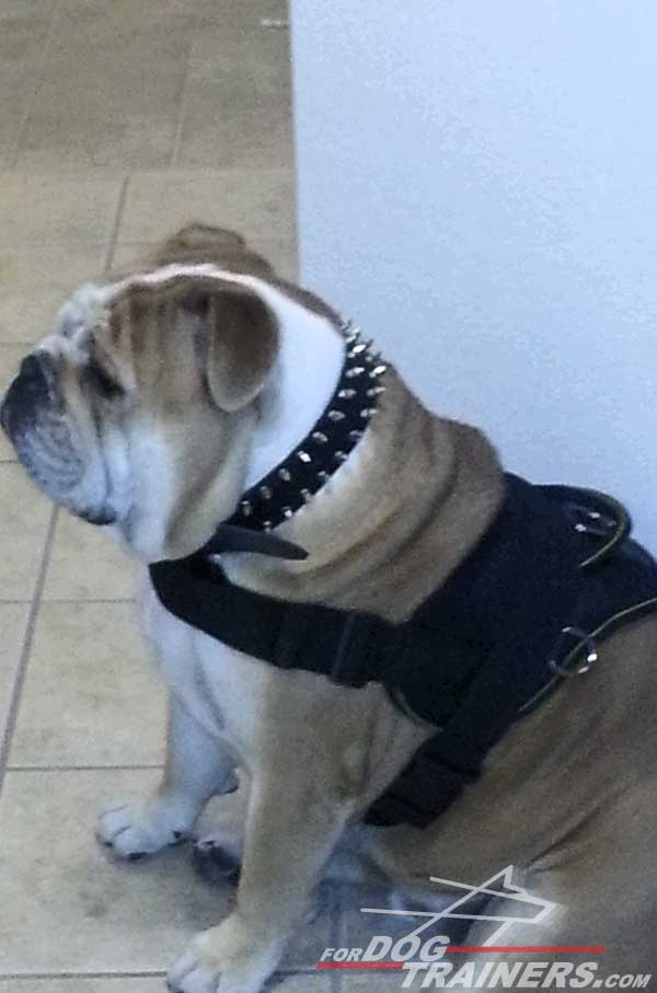Multipurpose Nylon English Bulldog Harness