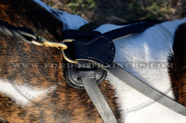 Harness with padded back plate