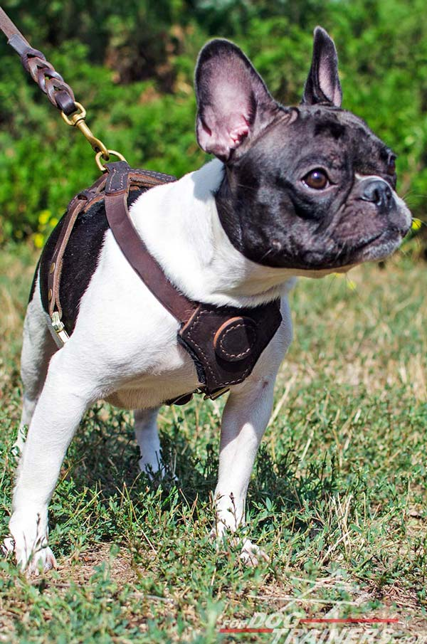 Leather Puppy Harness for French Bulldogs