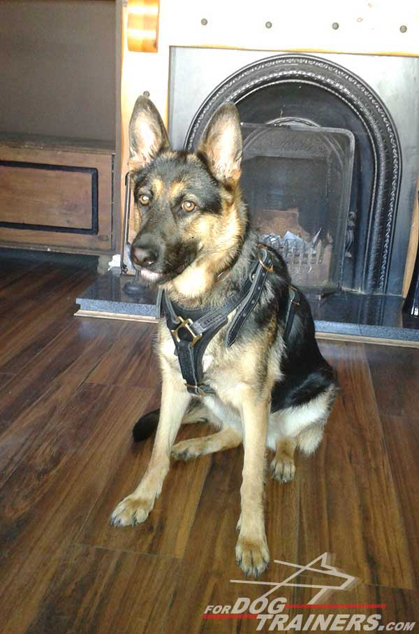 Adjustable German Shepherd Harness Leather Brass Hardware