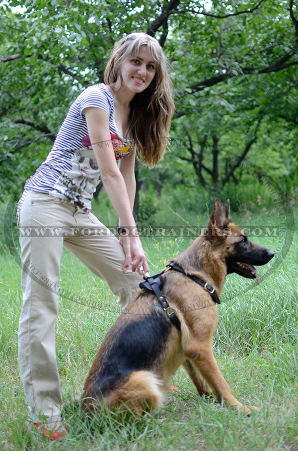 Walking German Shepherd Harness Leather