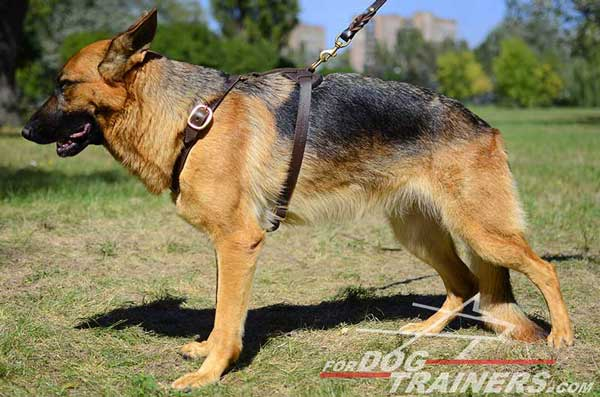 Light Leather German Shepherd Harness Adjustable