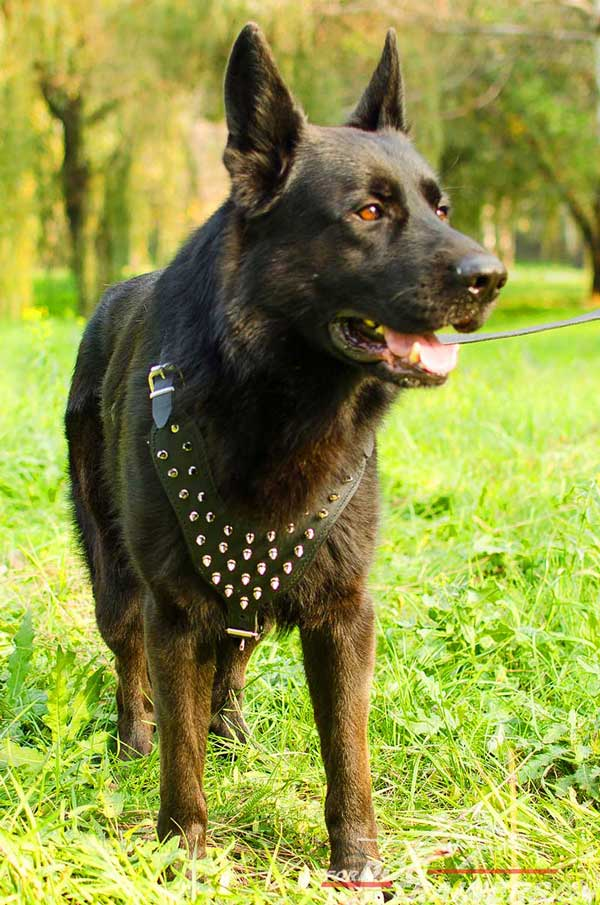 Leather Nickel Plated Spikes Decorated Chest German Shepherd Harness