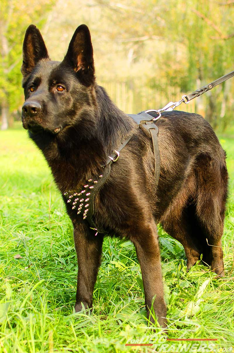 Buy German Shepherd Leather Spiked Dog Harness