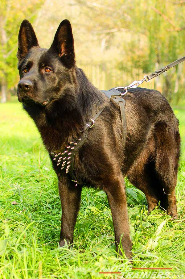 Stylish Leather German Shepherd Harness Nickel Spikes Decorated Chest