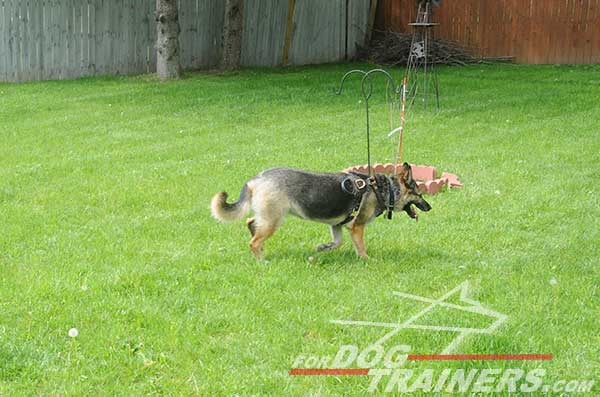Adjustable German Shepherd Harness Leather Padded Training