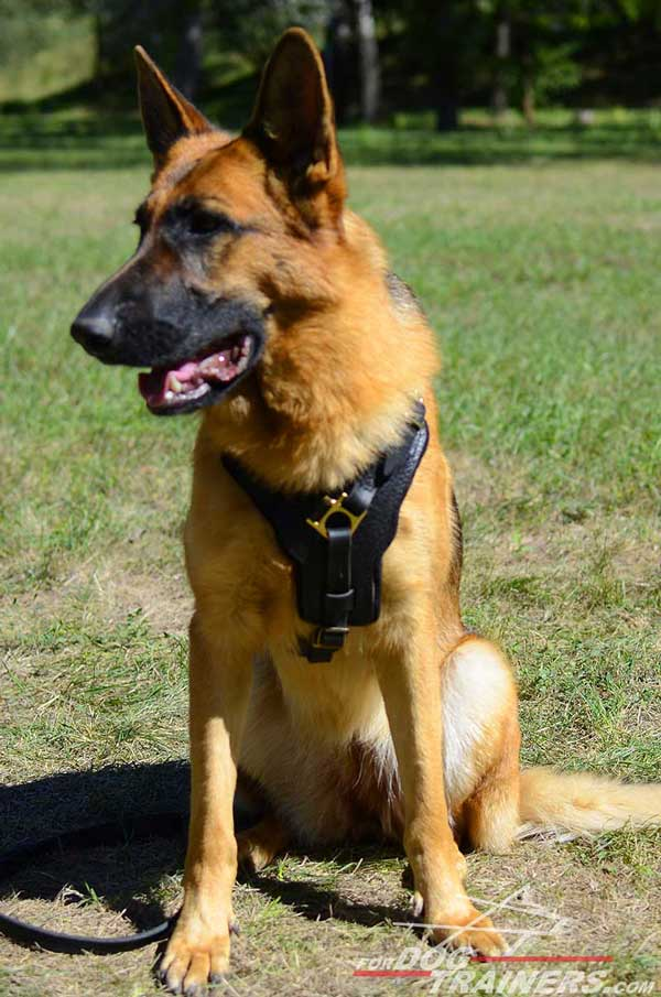 Padded Leather German Shepherd Harness