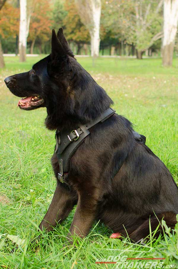Training German Shepherd Harness Leather Padded Chest