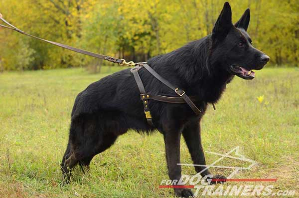 Leather German Shepherd Harness Pulling Brass Hardware