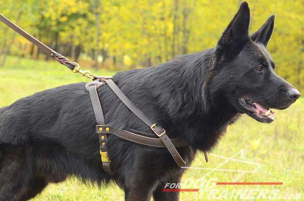 Leather Pulling German Shepherd Harness Quick Release Buckle