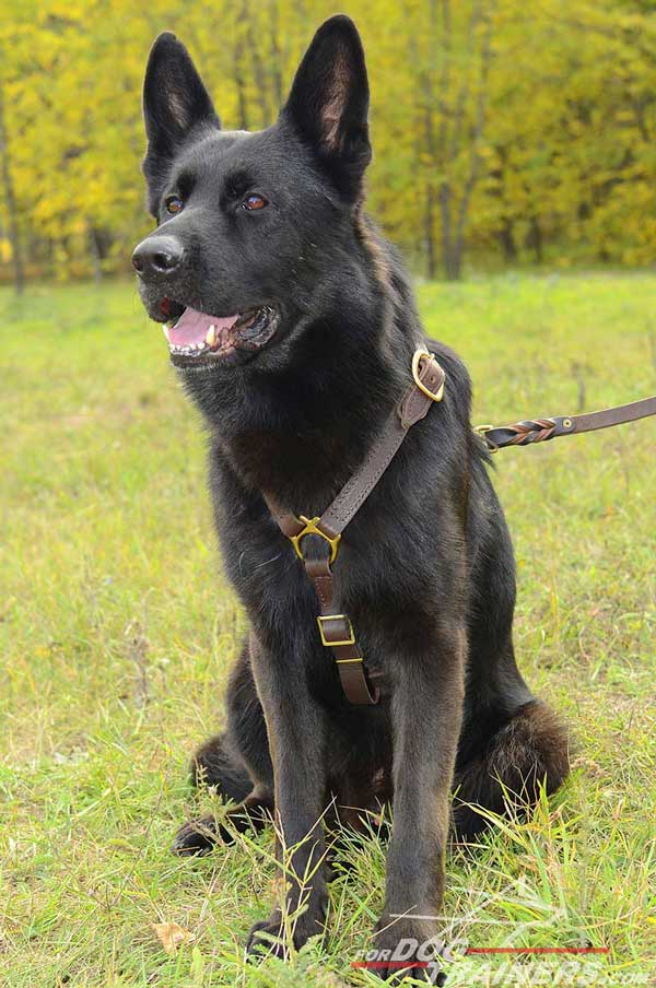 Tracking Leather German Shepherd Harness Adjustable