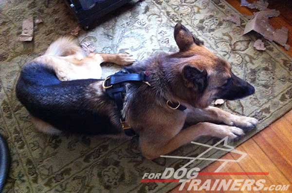 Tracking German Shepherd Harness Leather Dog Supply