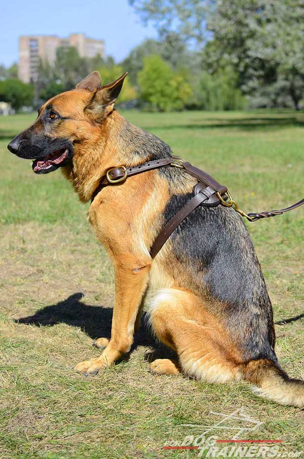 Leather German Shepherd Harness Tracking Dog Gear
