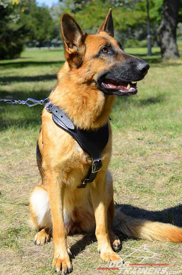 Training Leather German Shepherd Harness Adjustable Straps