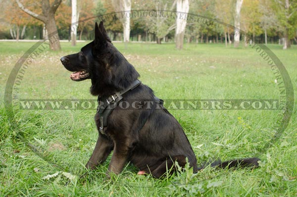 Training German Shepherd Harness Leather Padded