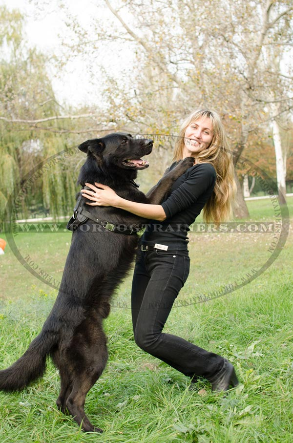 Training German Shepherd Harness Leather with Durable Handle