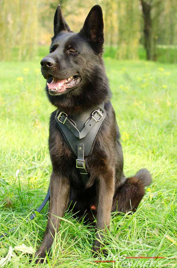 Agitation Training German Shepherd Harness Leather with Padded Chest