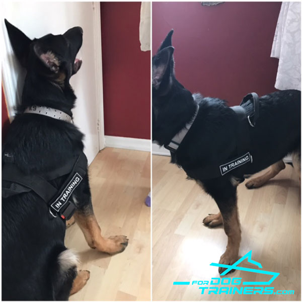 No-pull Nylon German Shepherd Harness for Strong Loki