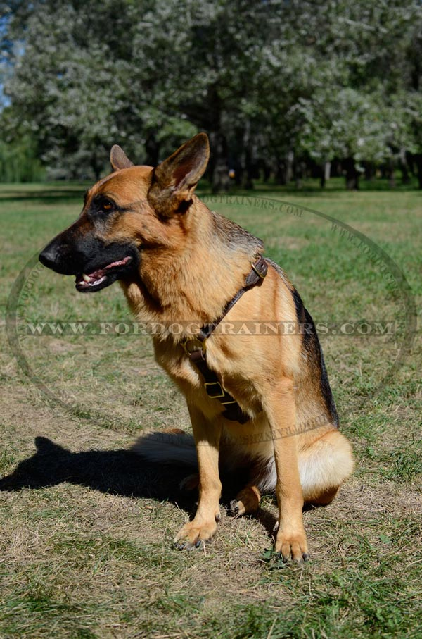 Leather Canine Harness for GSD