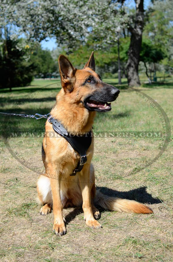 Highly Reliable Training Dog Harness