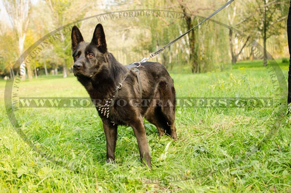Designer Spiked Dog Harness for Training and Walking