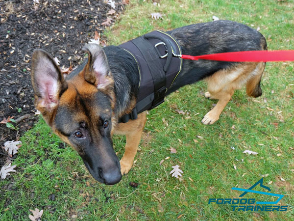 Nylon German Shepherd Harness with Strong D-ring for Leash Attaching