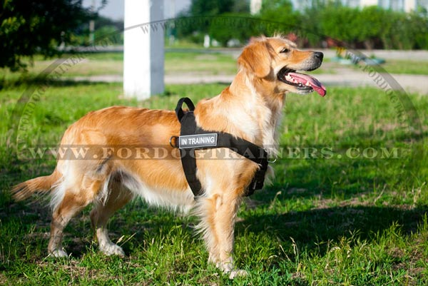 Walking And Training Golden Retriever Nylon Harness