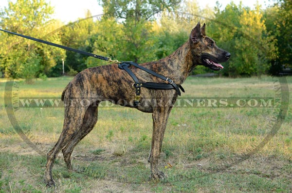 Pulling or Tracking Leather Canine Harness