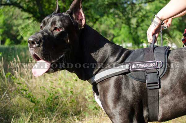 Great Dane Nylon Harness for Serach and Rescue