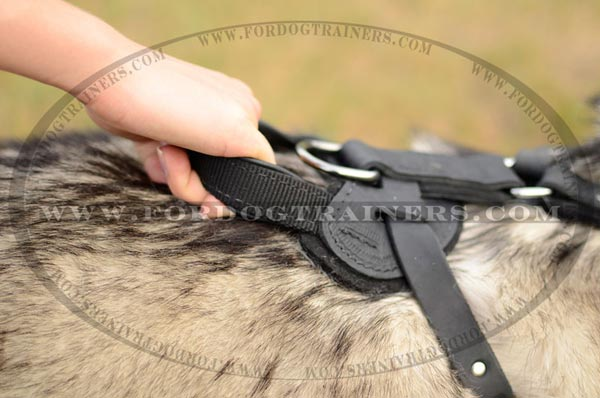 D-Ring of Leather Siberian Husky Harness