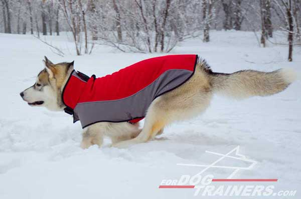 Warming winter coat for Huskies