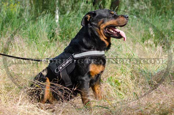 Strong Nylon Harness with reflective trim for Rottweiler