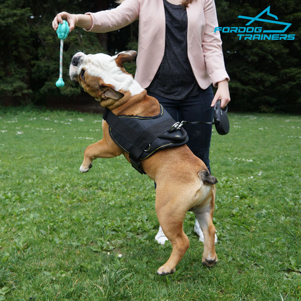 Any Weather English Bulldog Harness for Medium Breed Dogs