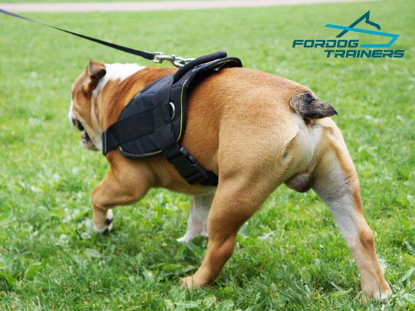 Nylon English Bulldog Harness Can be Quickly Adjusted