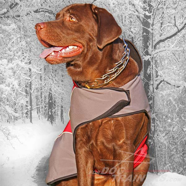 Great presents for your dog on Thanksgiving Day! : Dog