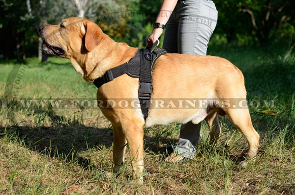 Easy Adjustable Nylon Canine Harness with Quick to Lock Buckle