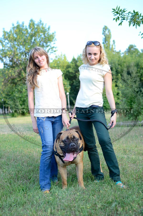 Multipurpose Leather Bullmastiff Harness