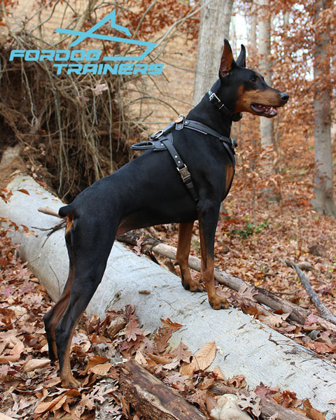 Adjustable Leather Doberman Harness with Handle