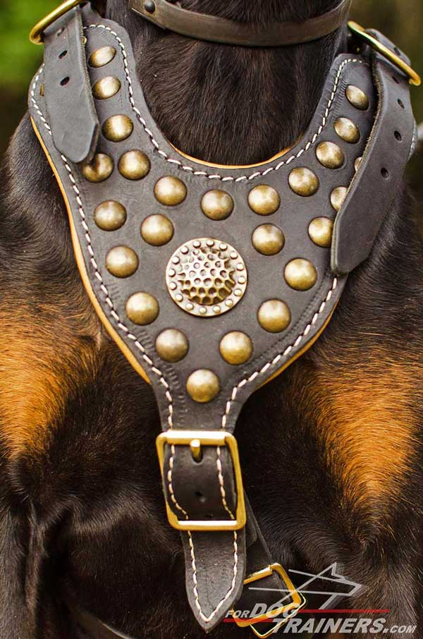 Luxury brass medallion and studs for leather harness for Doberman