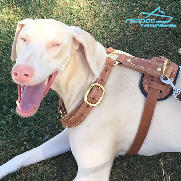Brass adjustable buckles for leather Doberman harness