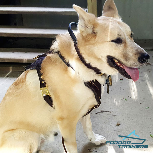 Padded Leather Dog Harness for Daily Training