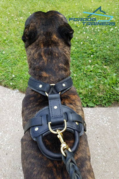 Padded Leather Dog Harness with Handle